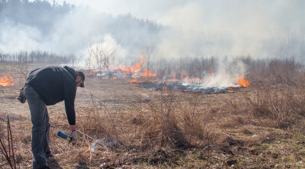 Setting a controlled prairie fire for managment